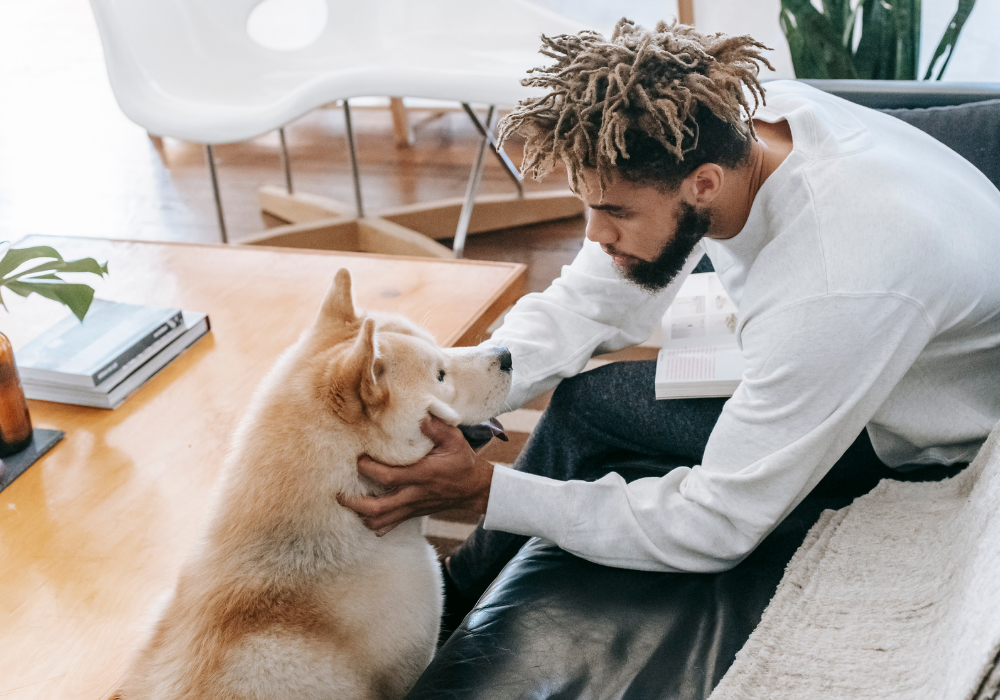 3 Questions to Answer Before Getting an Emotional Support Animal