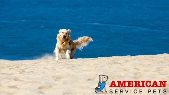 holistic pet blog