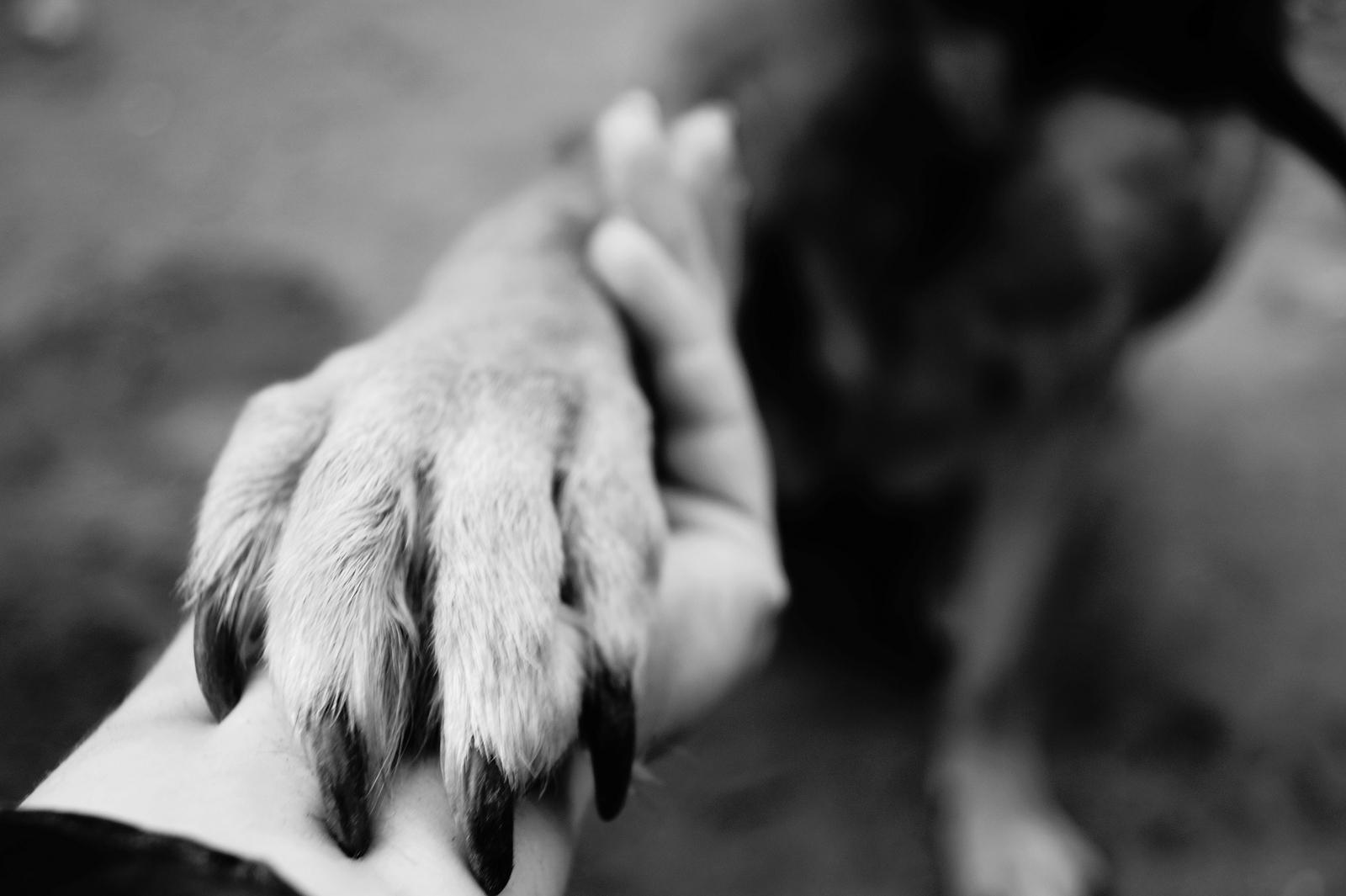 bigstock dog paw takes the woman hand 233599105
