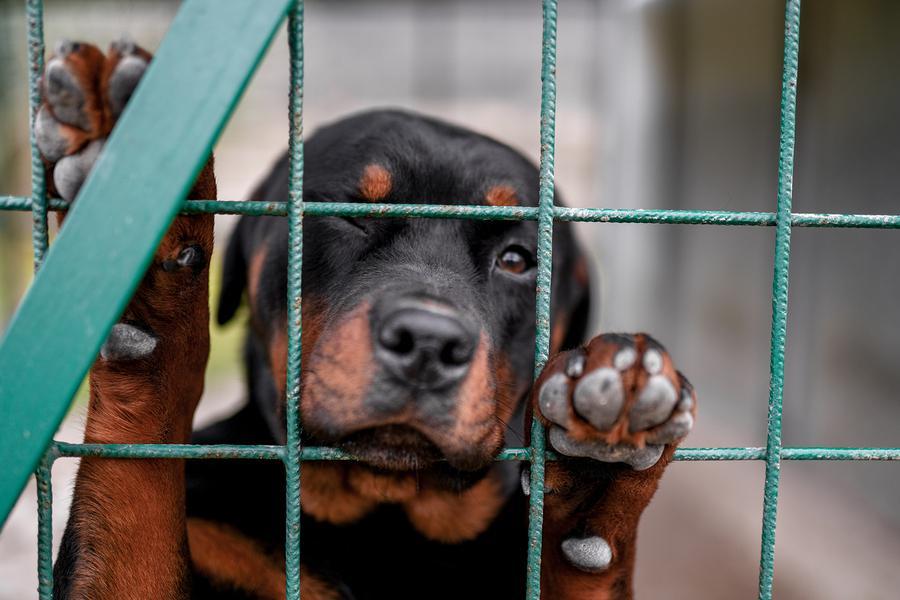 bigstock small puppy portrait in prison 294401026