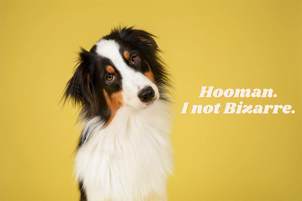 Hooman dog Meme
