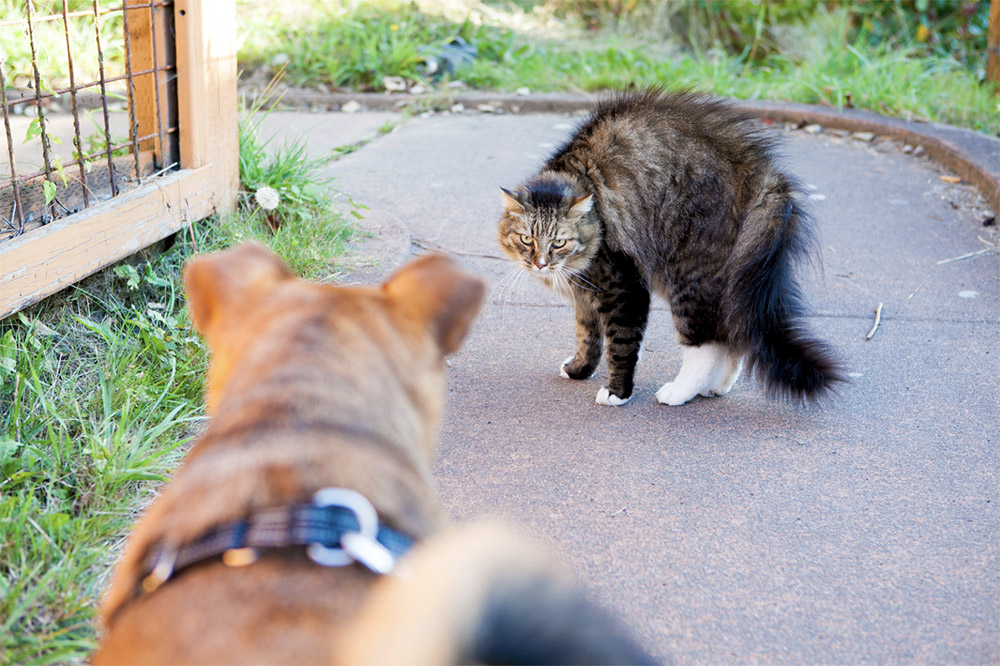 cat scared of dog
