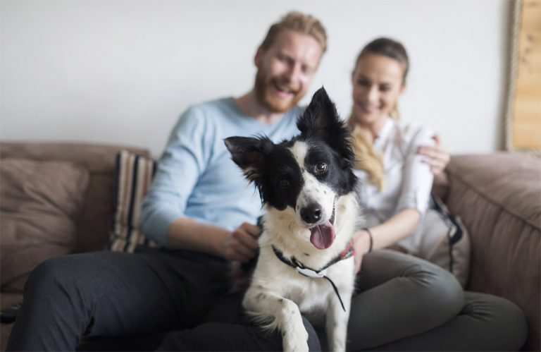 Dog sitting on couch with owners