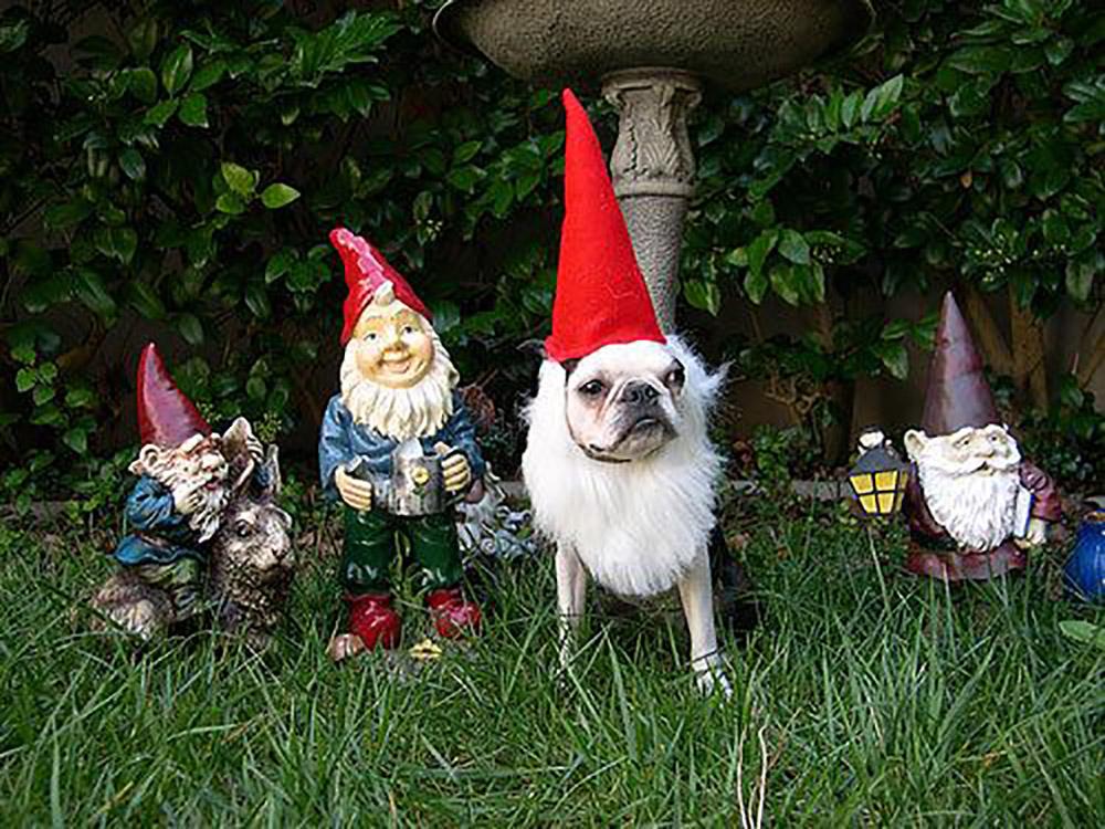 Gnome dog