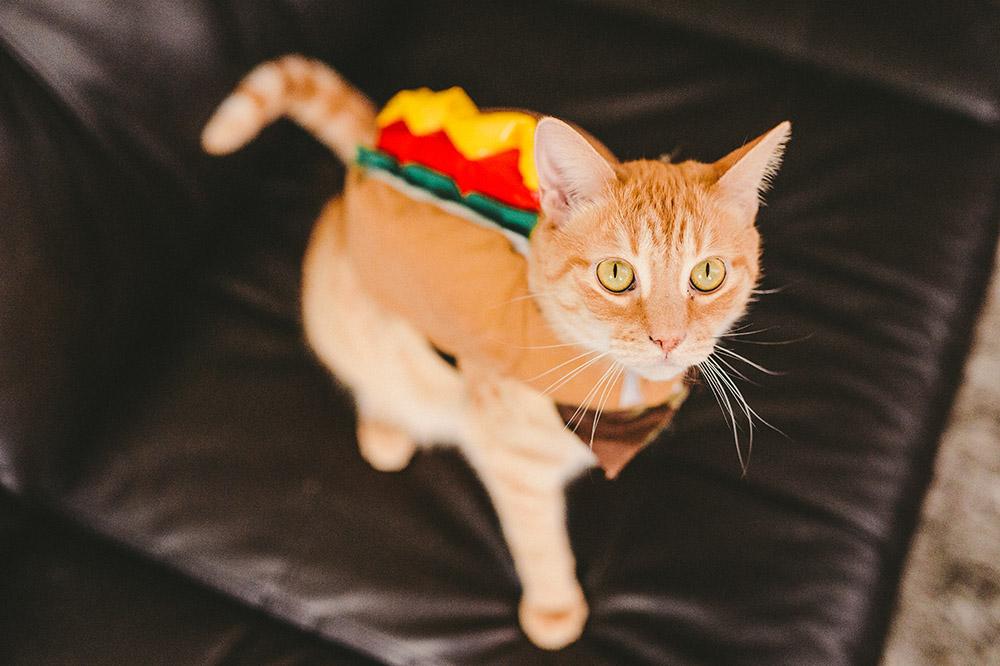 Hotdog Kitty