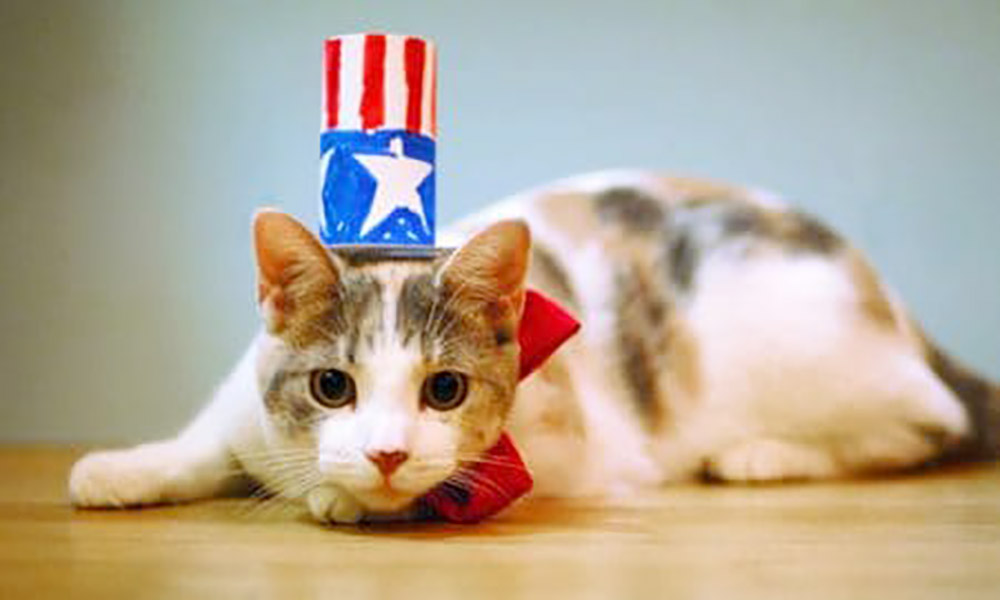 Pawlitician cat