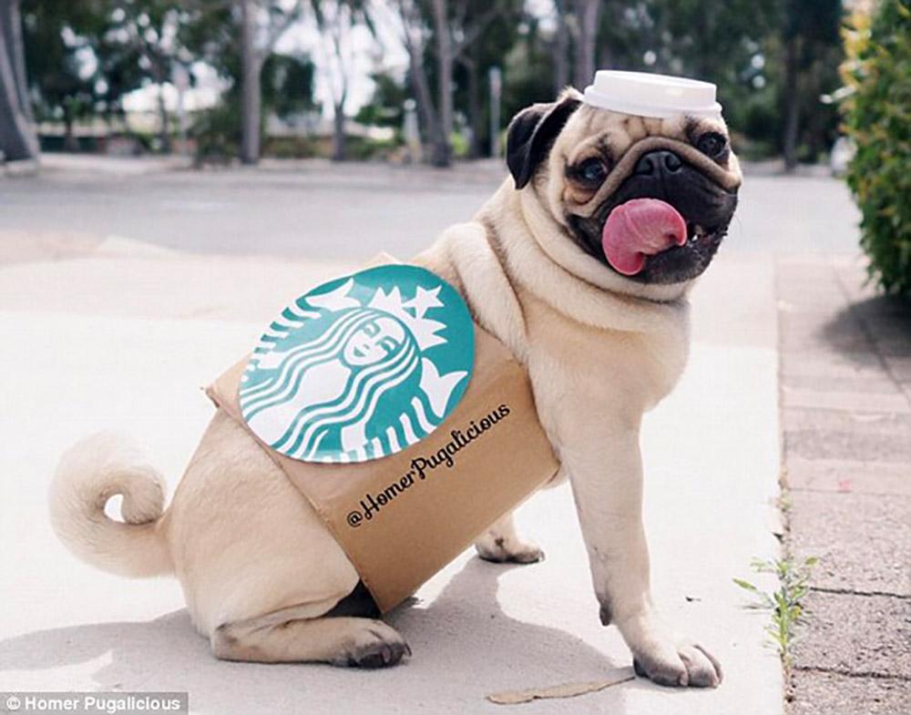 Puppachino dog
