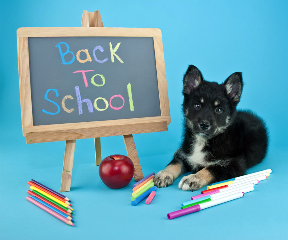 Dog with back to school sign