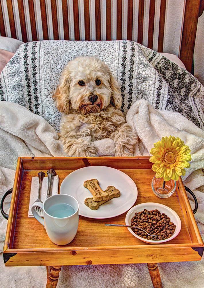 Dog breakfast in bed