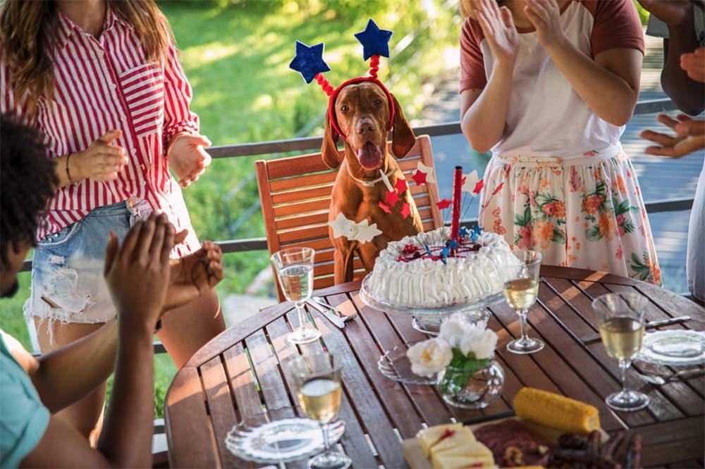 Dog celebrating with Family
