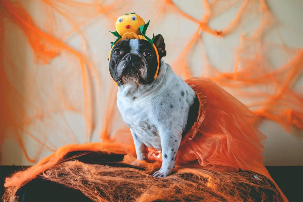 Dog in Orange Tutu