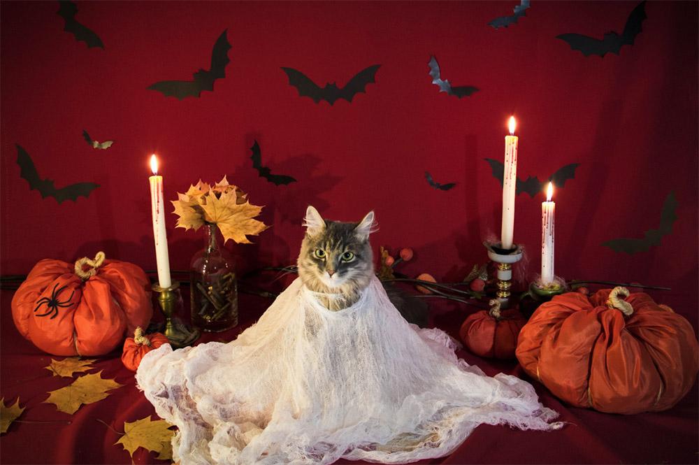 Ghost Cat Costume