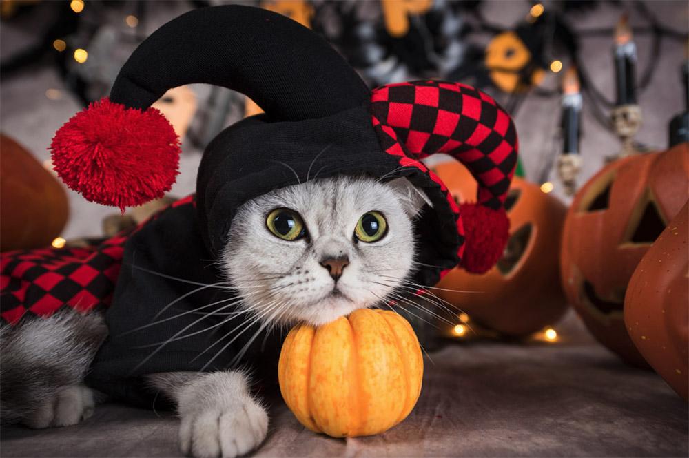 Kitty Jester costume