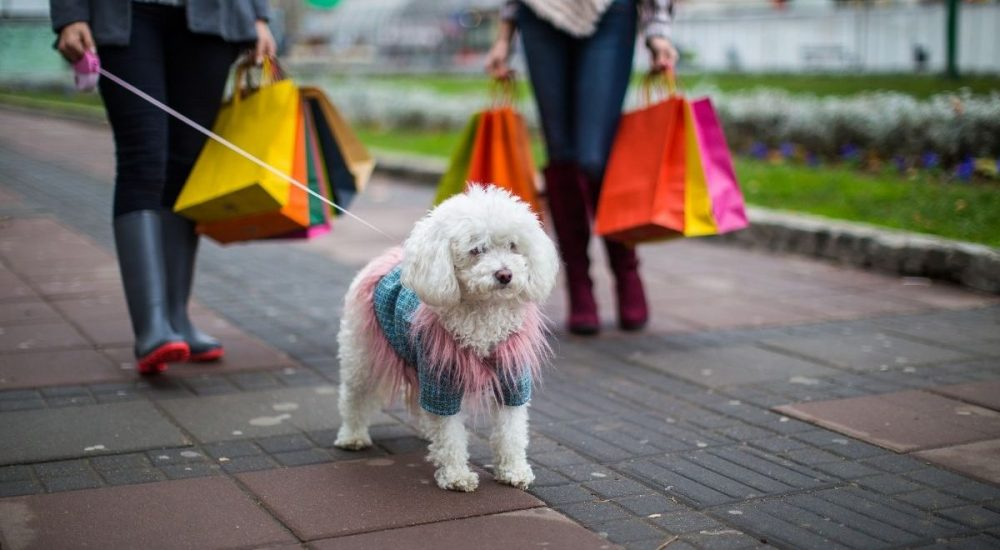 The 30 Best Gift Ideas For Dog Parents 2020