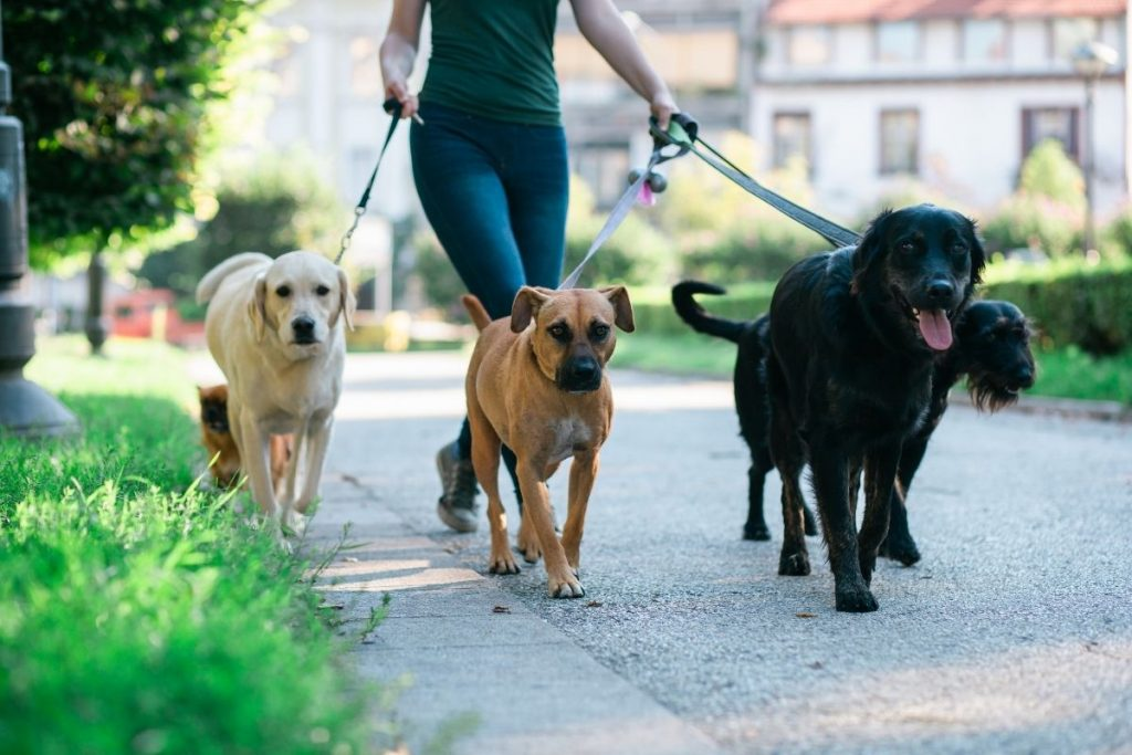 Holiday Volunteer Ideas Designed For The Animal Lover