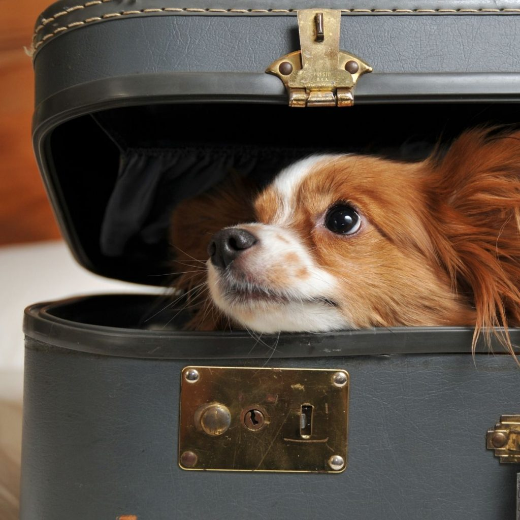 7 Surprising Dog Behaviors New Owners Should Know
