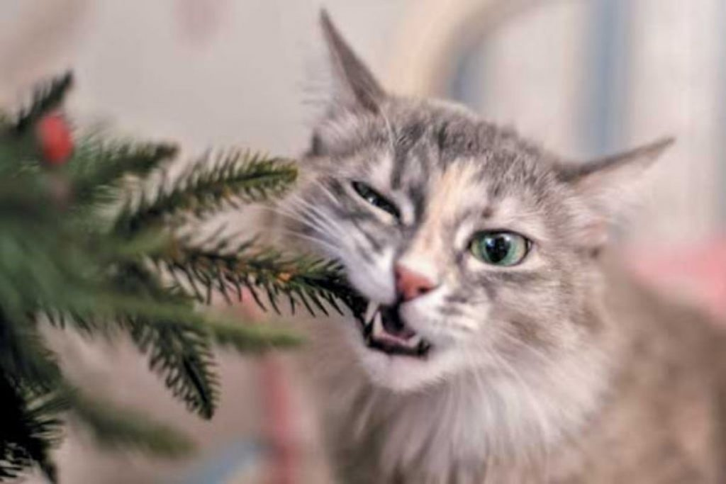 Tips to Keep Your Pet Safe and Enjoy the Holidays