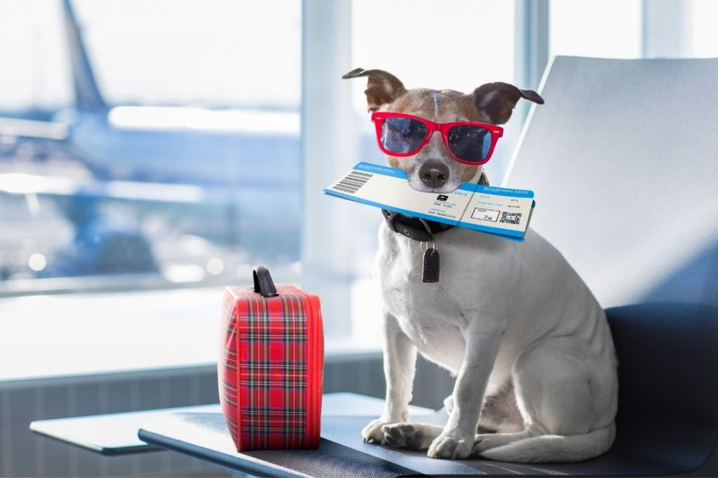 New DOT Rules for Emotional Support Animals: What Every ESA Owner Should Know