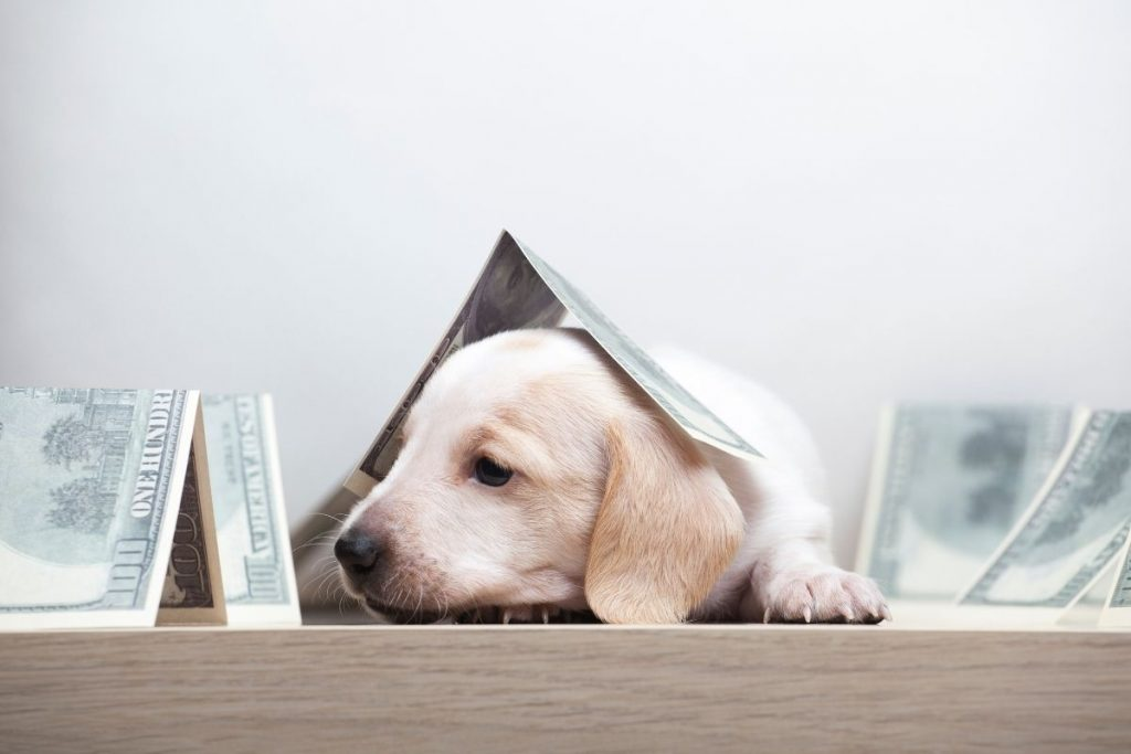 Pros and Cons of Pet Subscription Boxes
