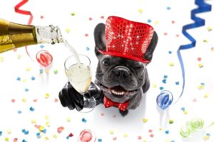 10 resolutions you can achieve with your pet in 2021
