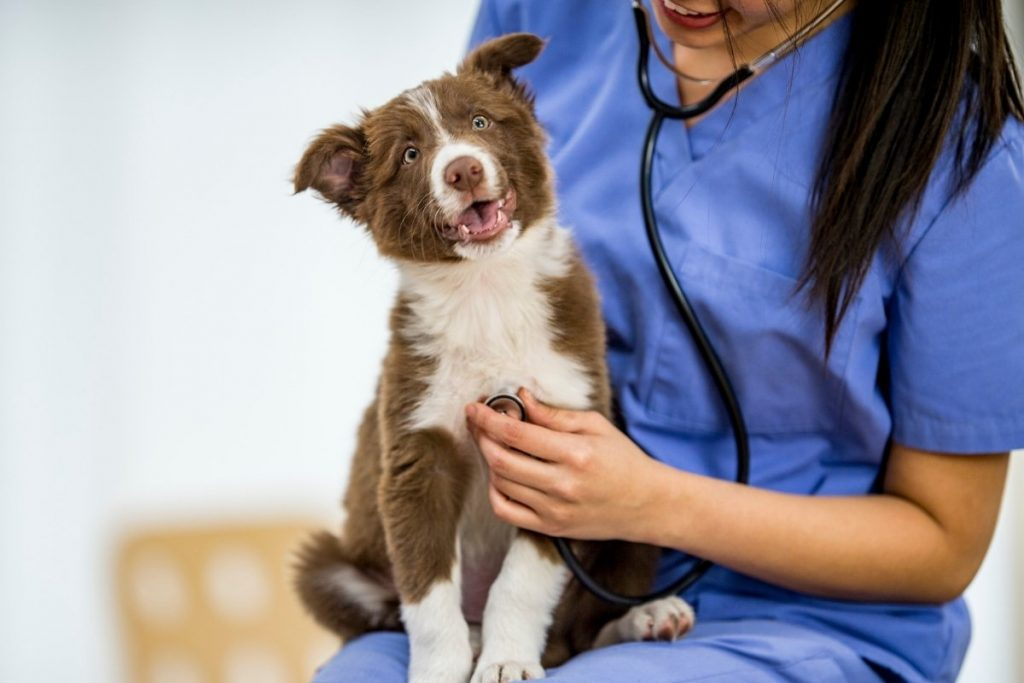How To Prepare for Your First Vet Visit