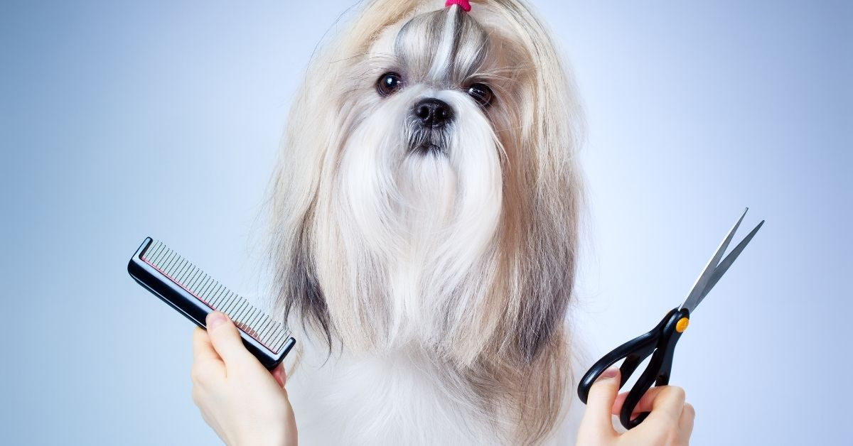 Costly Mistakes Pet Owners Make And How to Avoid Them