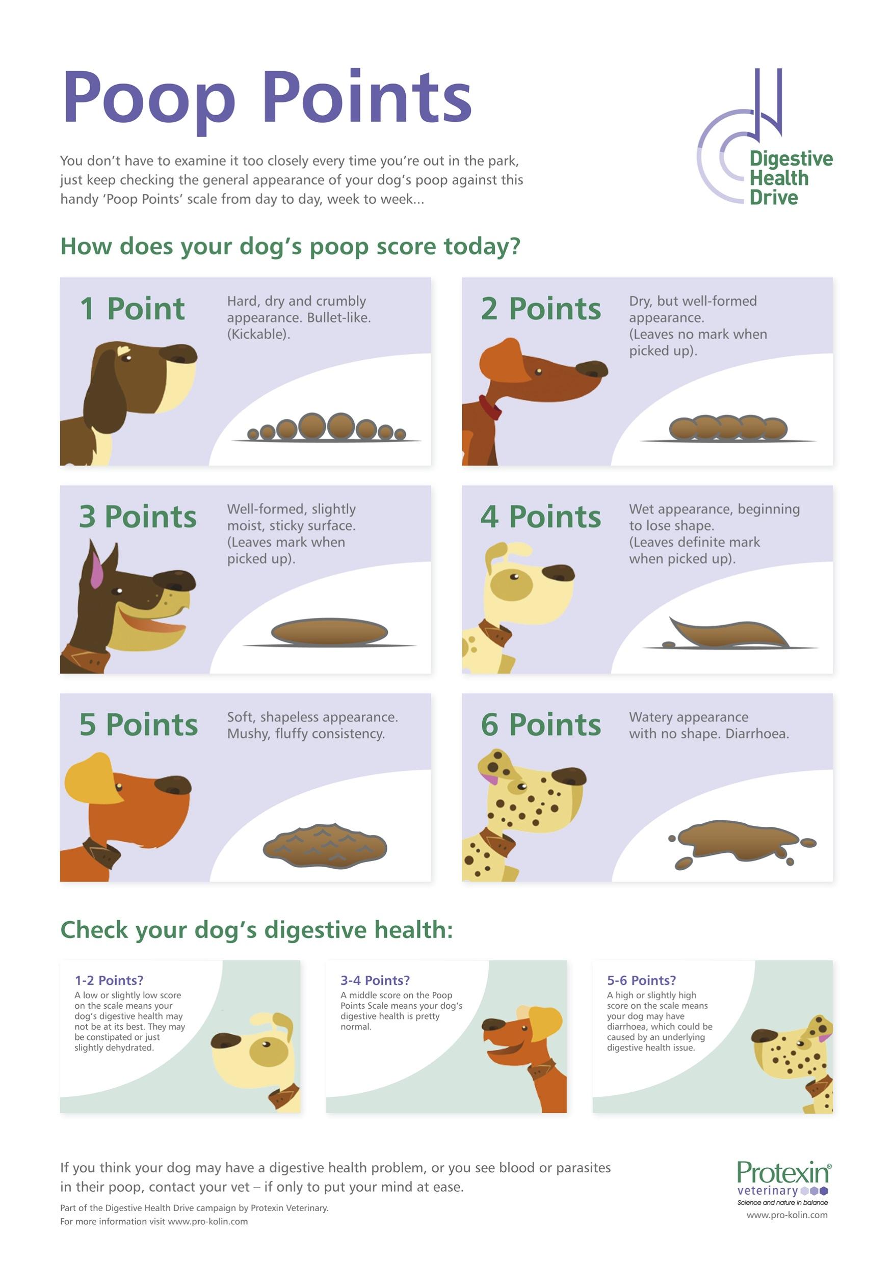 The Ultimate Scoop on Dog Poop