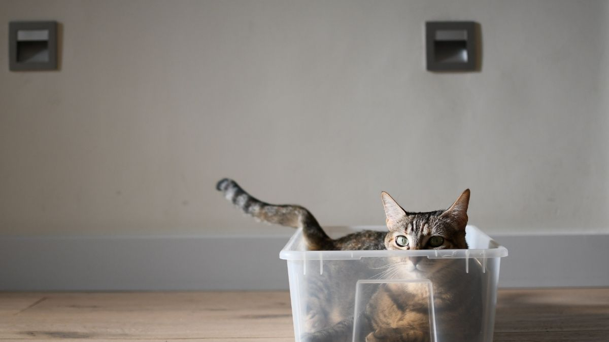 Important Things Every Cat Owner Should Know