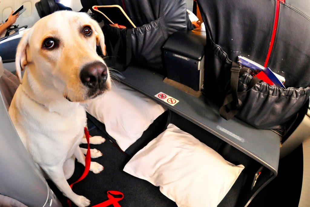 Emotional Support Animals vs Psychiatric Service Dogs: What's the difference?