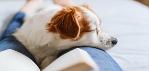 3 Ways Service Dogs Can Calm Anxiety