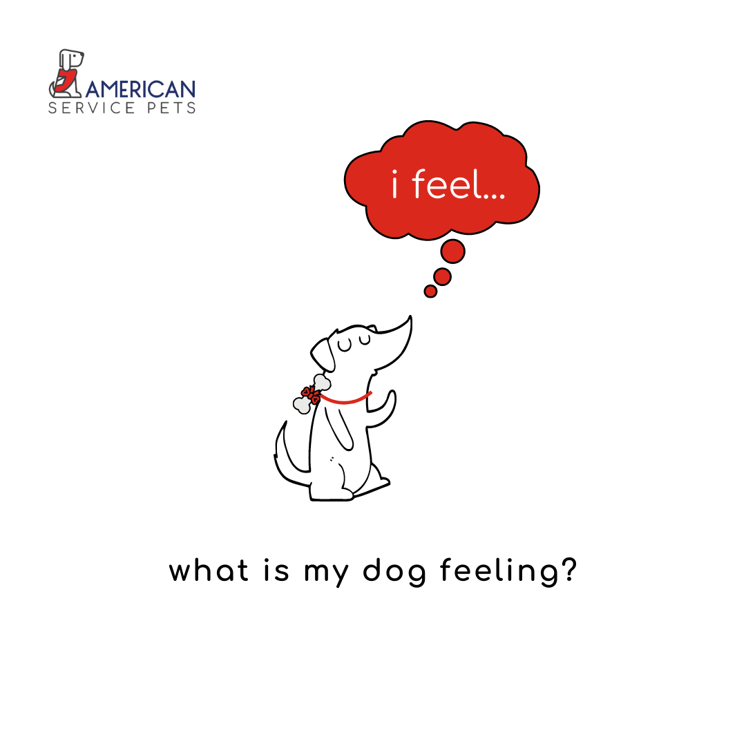 What Is My Dog Feeling?