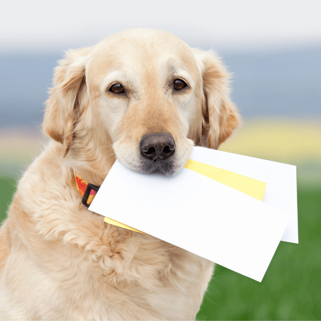 dog carrying your mail