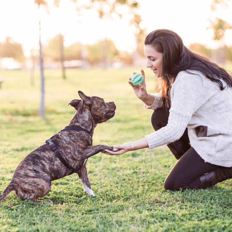 teaching your dog to shake