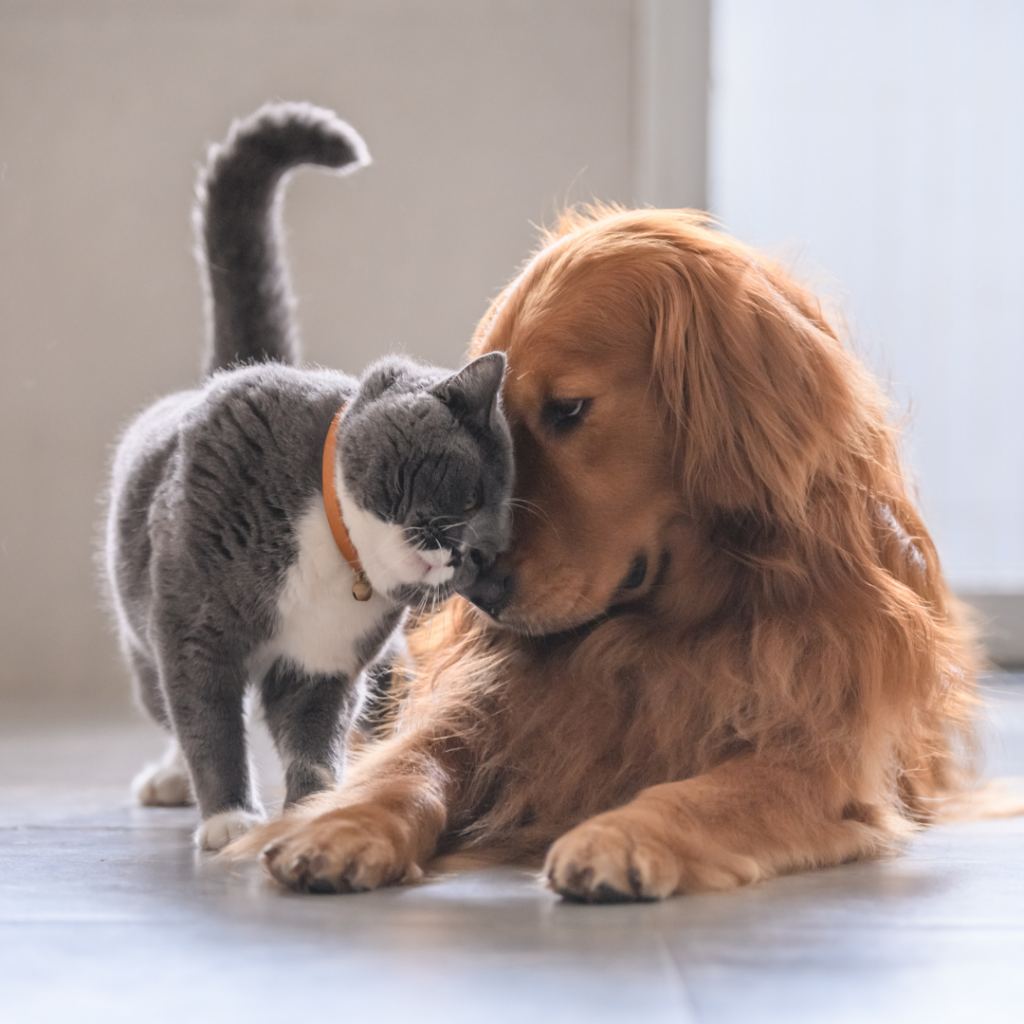 Cats vs Dogs: Which is the Right Emotional Support Animal for You?
