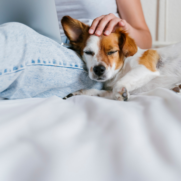 11 Ways to Get Your Dog to Trust, Love and Respect You