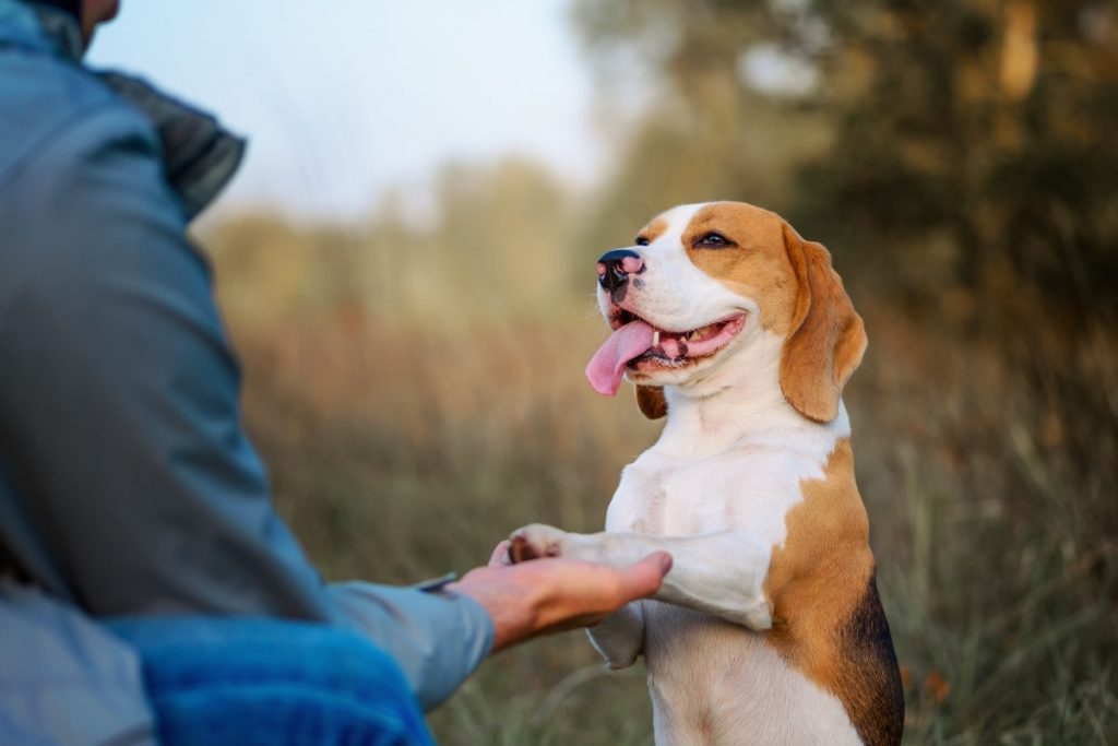 11 Ways to Get Your Dog to Love Trust and Respect You