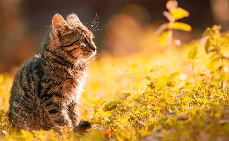 cat staring2