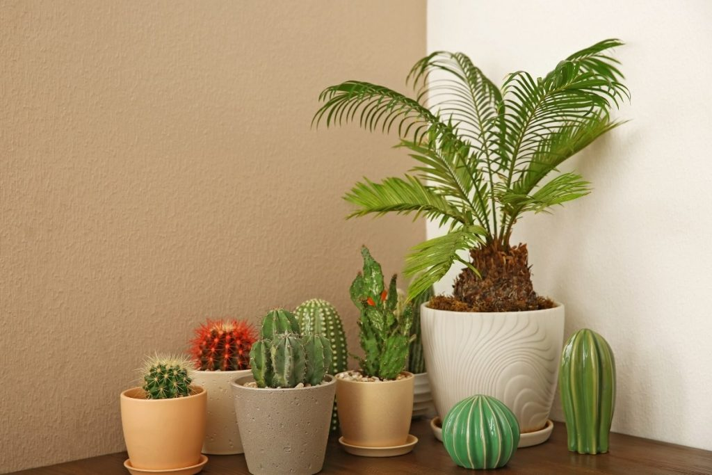 Are Plants Toxic to Dogs? 10 Plants to Avoid if You Are a Dog Owner