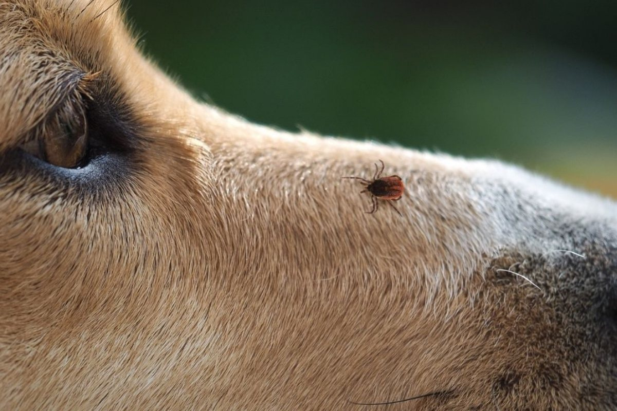 Outdoor Tips for Dog Owners: Snake bites, Ticks, and Overheating