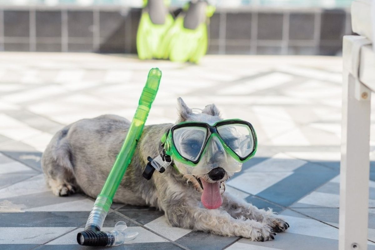 Outdoor tips or dog owners to prevent overheating