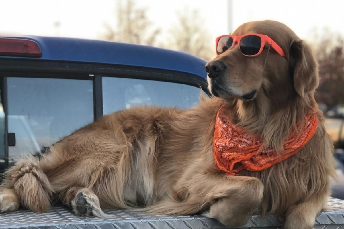 Important Outdoor Safety Tips for Dog Owners