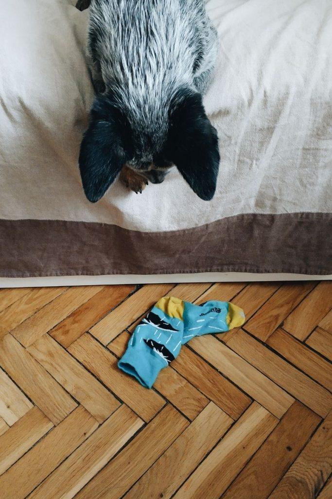 10 strange dog behaviors: stealing socks