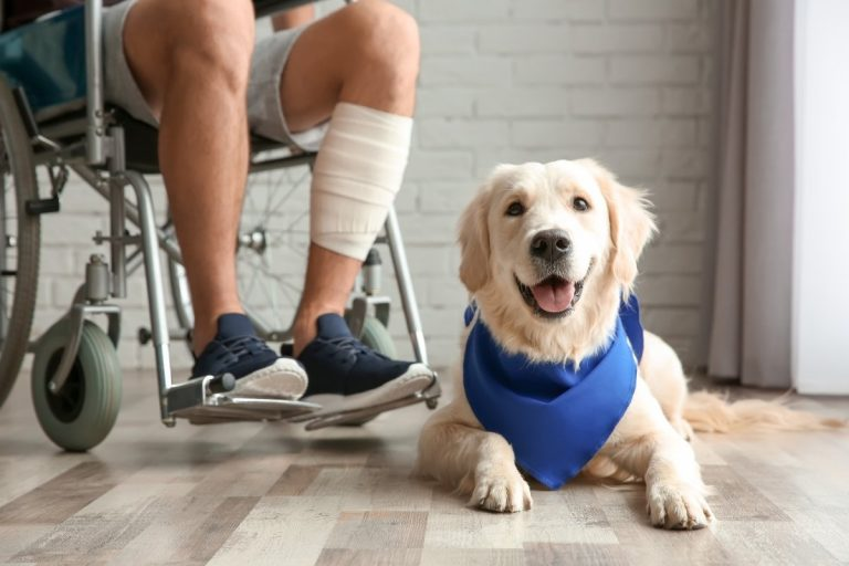 Are Service Dogs Allowed in Hotels?
