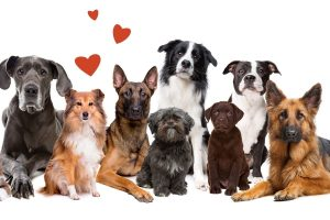 What Are The Cutest Dog Breeds? Top 6 Choices