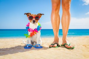 Summer safety tips for dog owners