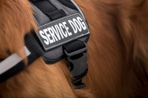 Why You Should Never Fake a Service Dog
