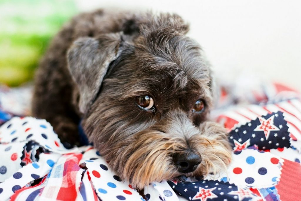 Preparing Your Dog for the 4th of July