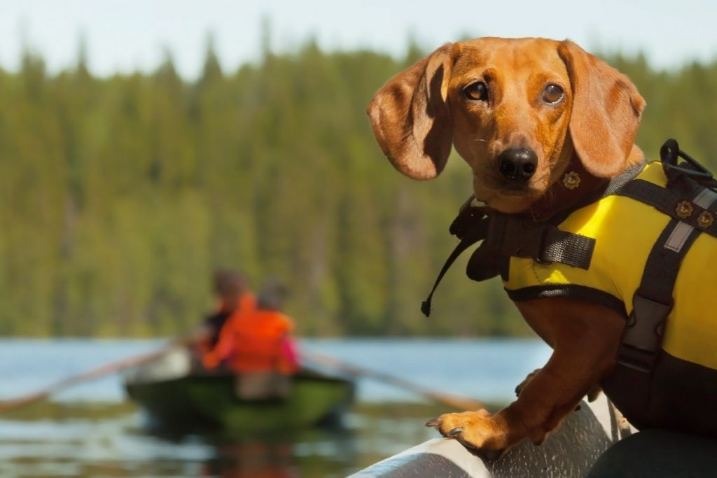 Summer Safety Tips for Dog Owners who like water activities