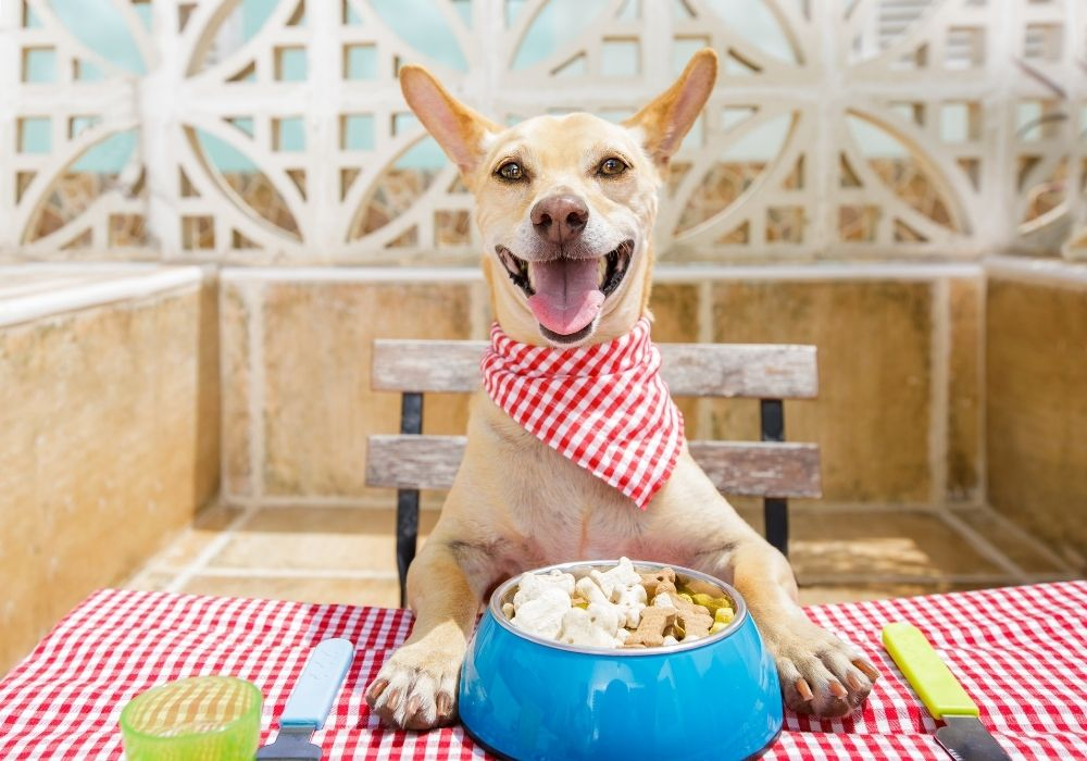 Choosing the right food for your dog is super important