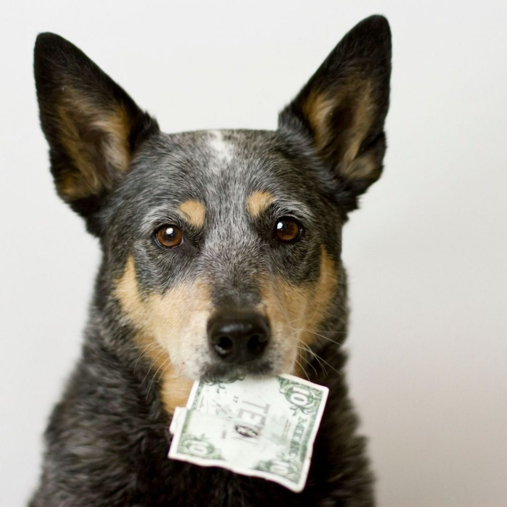 Do owners pay extra to have an psychiatric service animal at a hotel?